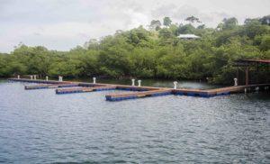 Marina dock front copy